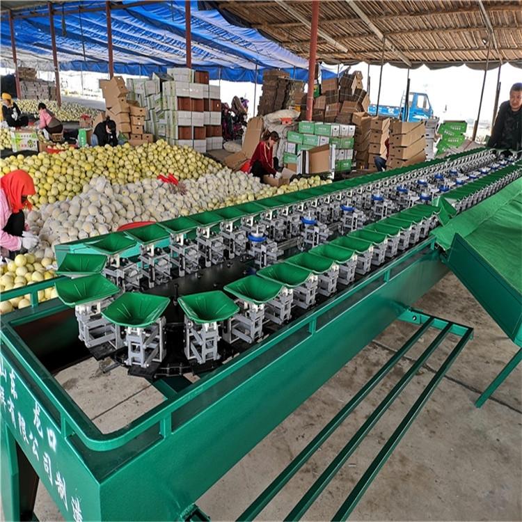 蜜桃分拣设备水果分选机规格重量分级神器
