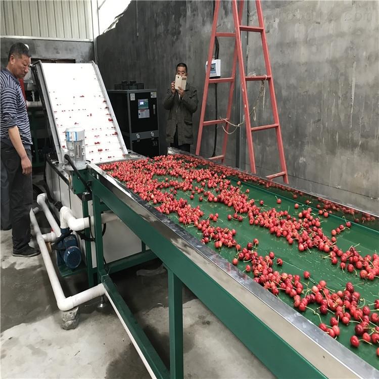 技术过硬的樱桃分选机厂家  龙口凯祥