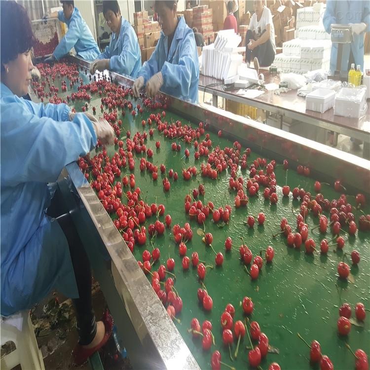 水果预冷设备果蔬分级机有水预冷区的分选机