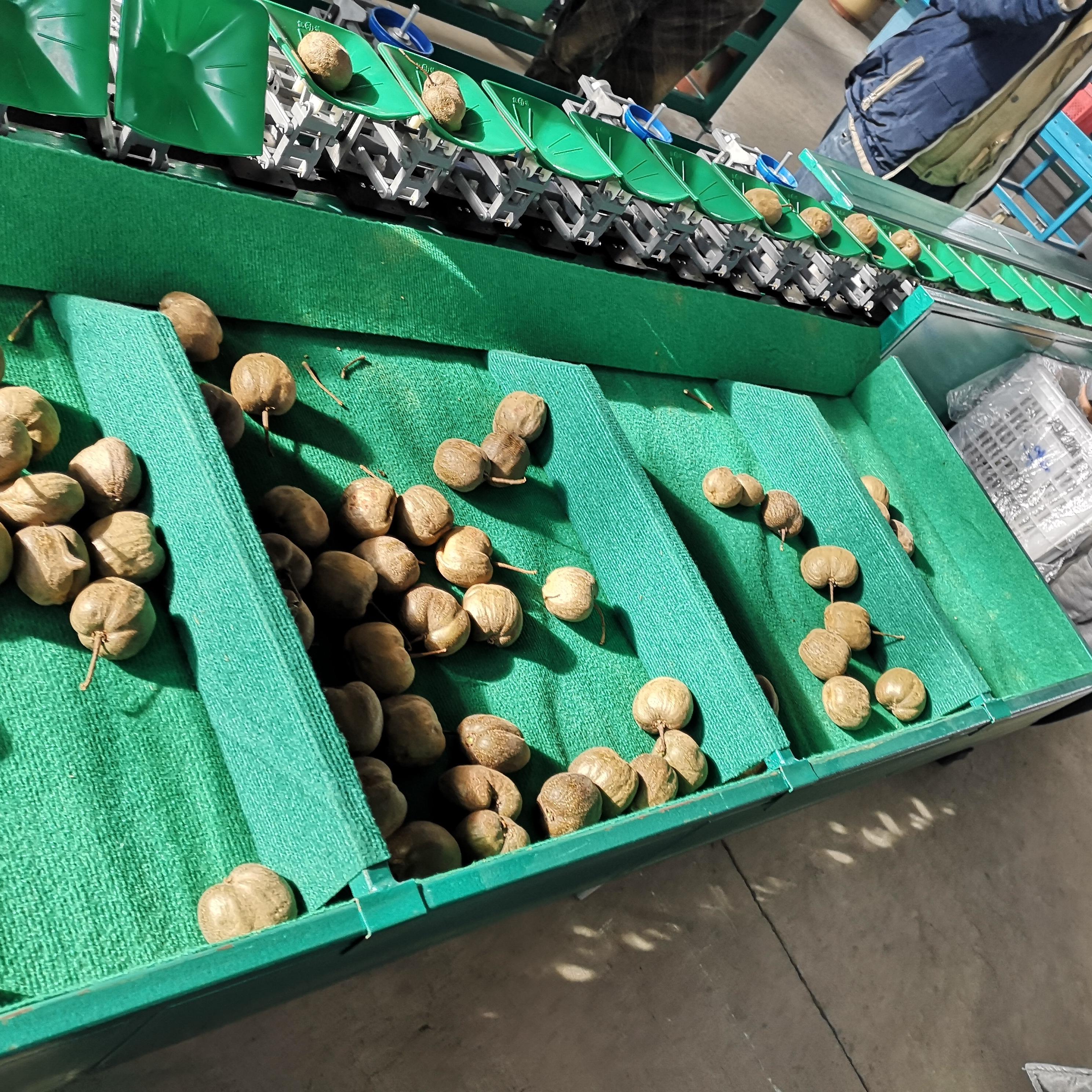 猕猴桃分选机 果蔬分级机 南阳有卖的么