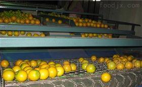 橙子分级机