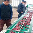 6XY-2天宝樱桃直径选果机 厂家直销 泰安有卖的么