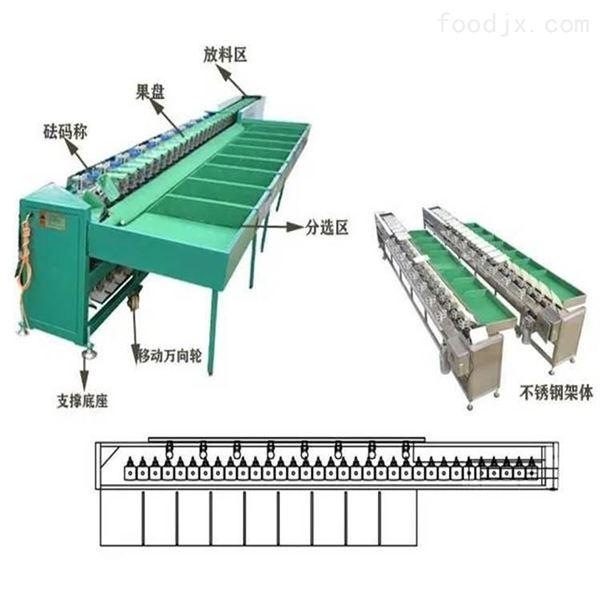 陕西洛川苹果选果机  快速分级的机器