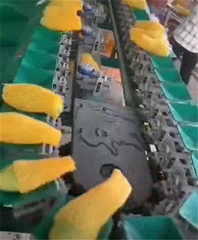 广西百色芒果称重分级机  不伤果  效率高