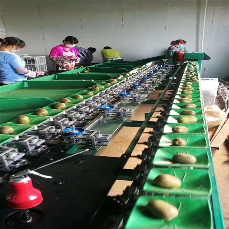周至猕猴桃自动选果机 机械分选 节约劳动力