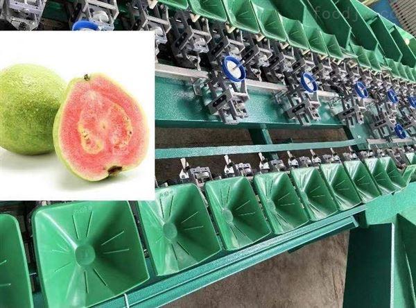 广西芭乐选果机 分选大小的 效率高的机器