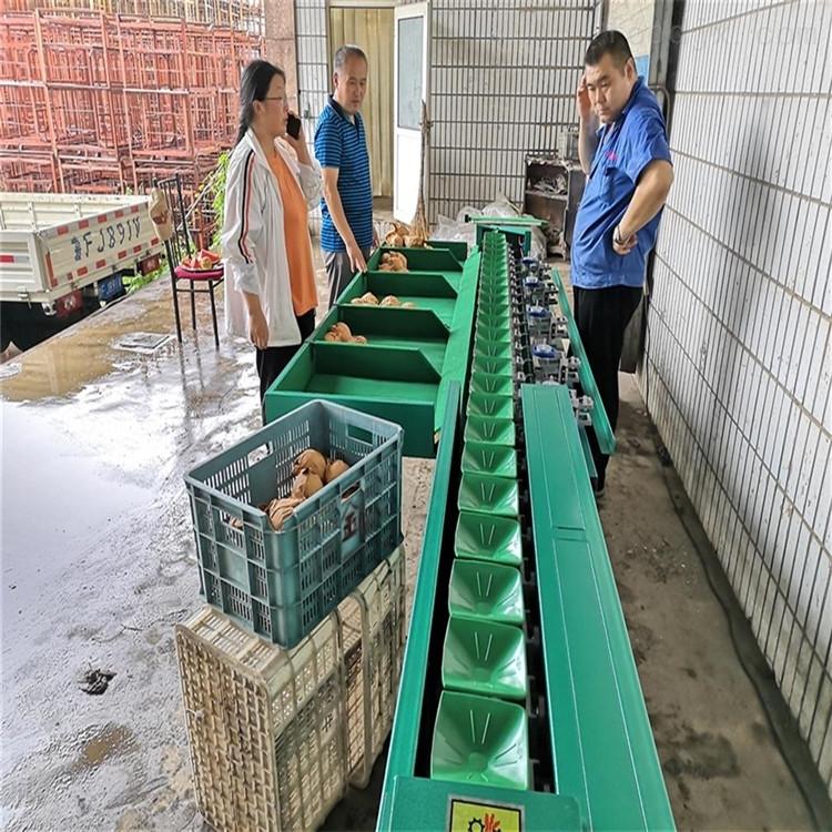 四川柠檬分选机水果重量分级设备果蔬分拣机