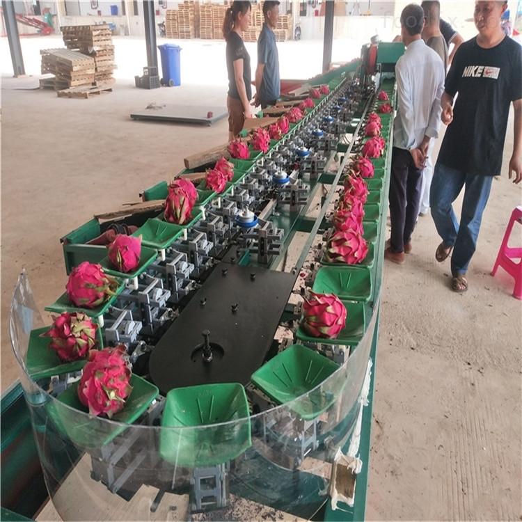 广西南宁火龙果分级机水果选果机可定做