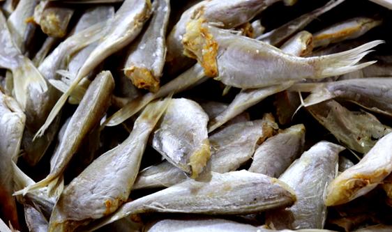 魚粉產銷波動變化較大 國內供需緊平衡